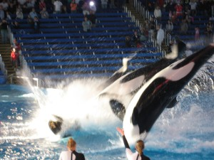 Sea World, Winter \'08